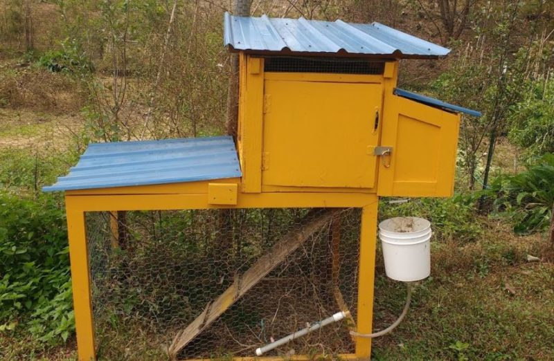 this coop is too small, and not ideal if you did panic buy chickens