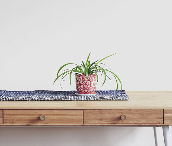 The cat safe plant Spider plant on a desk