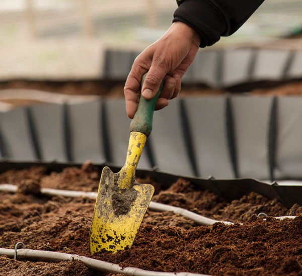 A dirty trowel digging in the dirt for soil testing