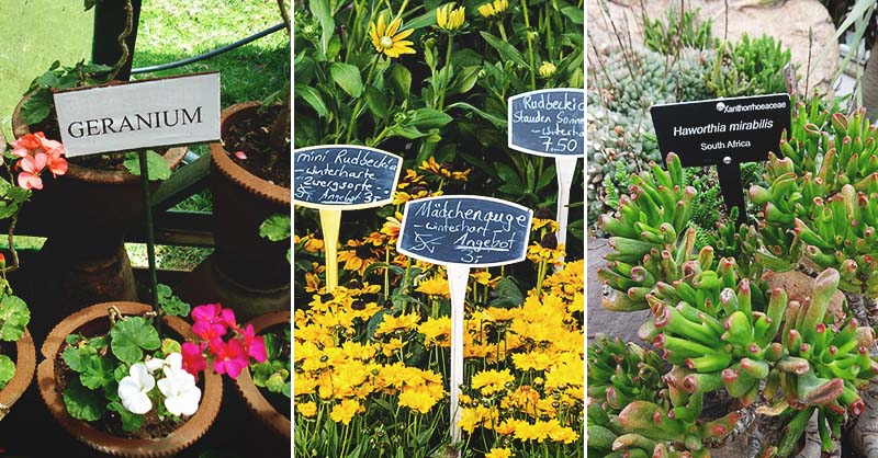How To Use Plant Labels To Keep Your Garden Organized And 10 Diy