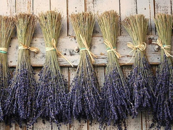 Lavender drying against a fence