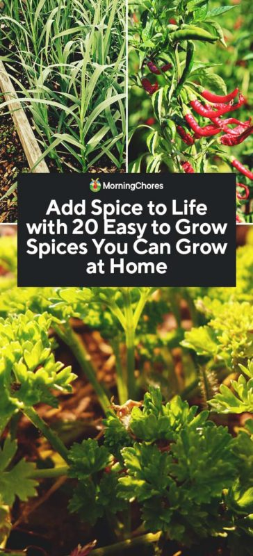 20 Easy-to-Grow Spices You Can Grow at Home