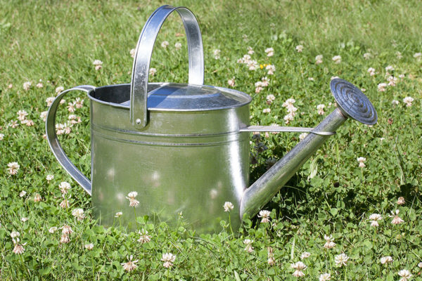 Watering can sitting in grass used for compost tea recipe application