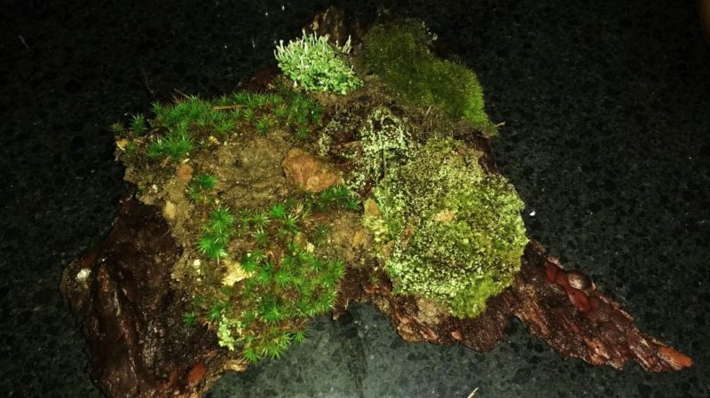 landscaping with moss