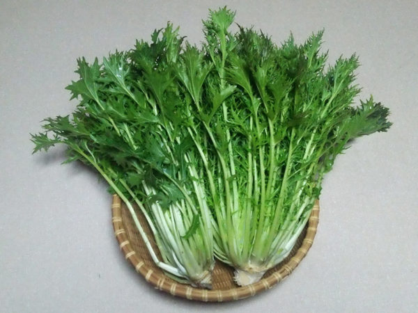 mizuna mustard greens on a plate