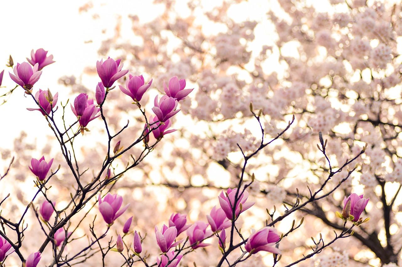 february-gardening-tips