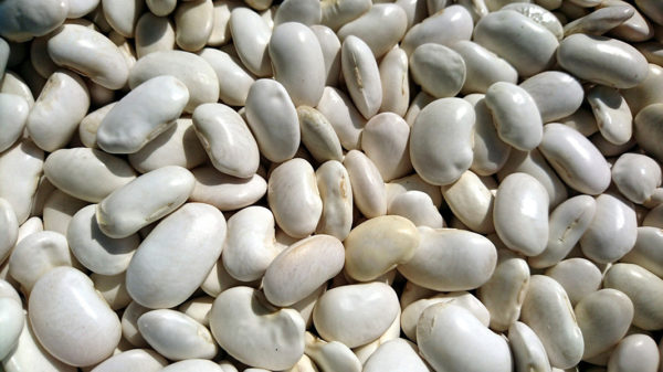 Dried great northern beans