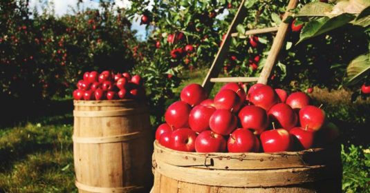 Growing Apple Trees: The Complete Guide to Plant, Grow, & Harvest Apples