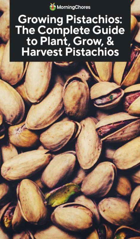 Growing Pistachios: Growing Pistachios: The Complete Guide To Plant, Grow