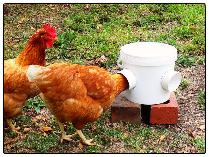 use feeders to prevent coccidiosis