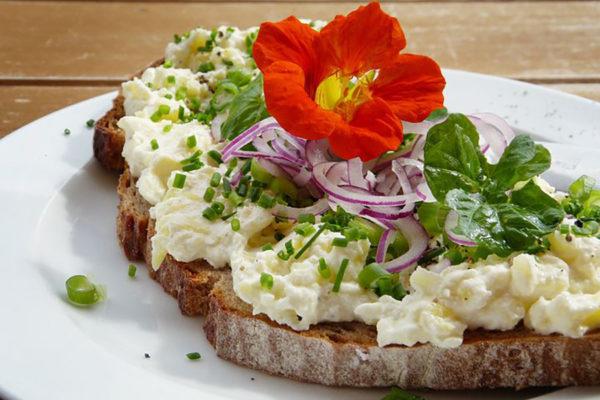 Nasturtium blossom on a sandwich