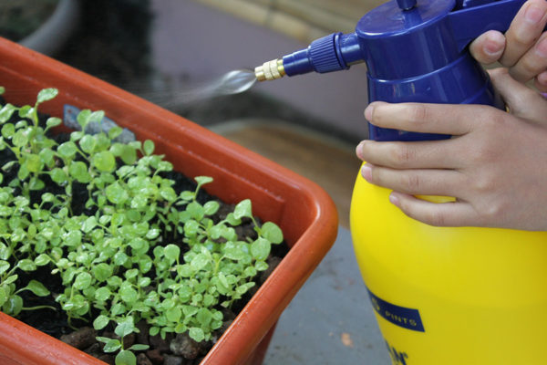 Neem oil for plants being sprayed on seedlings