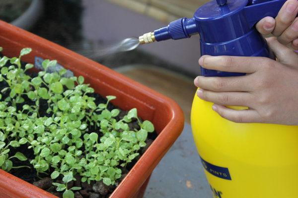 Neem oil for plants being sprayed on seedlings