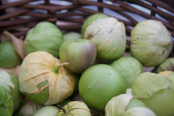 Harvested tomatillos