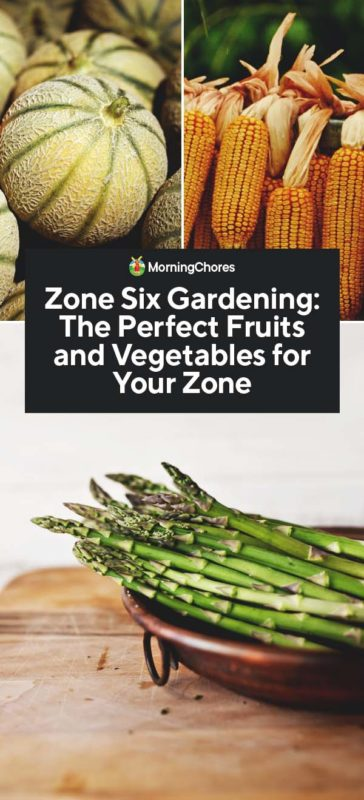 Zone Six Gardening The Perfect Fruits And Vegetables For Your Zone