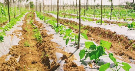 14 Do's and Don'ts of Growing an Organic Vegetable Garden