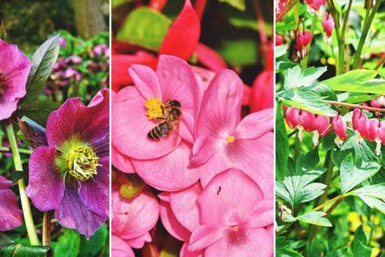 46 Deer Resistant Plants to Keep Your Garden Safe