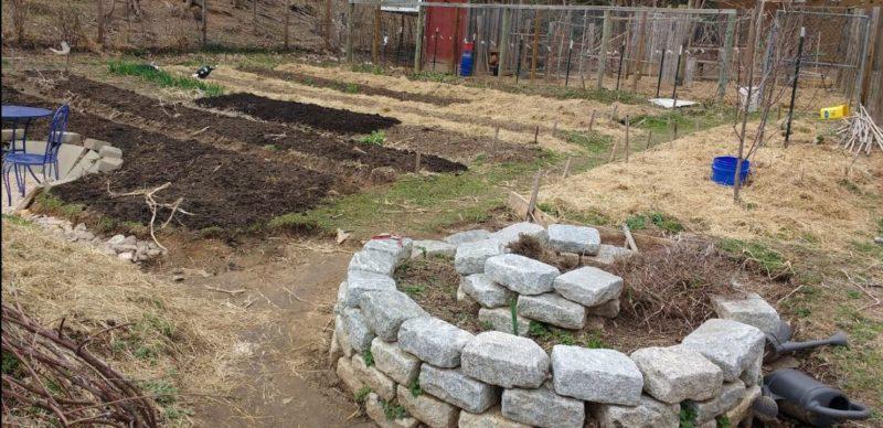 Tasha's garden