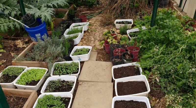 seedlings getting a head start for spring gardening
