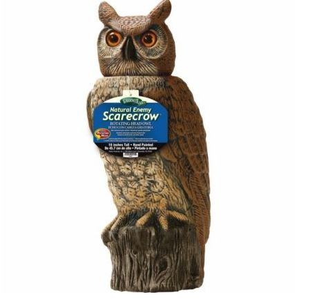 Owl statue to scare off chicken hawks