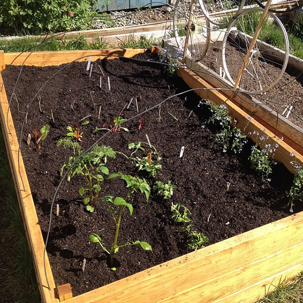 How The Square Foot Raised Bed Gardening Can Transform