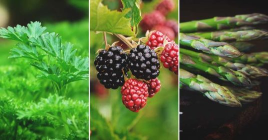 Zone Nine Gardening: The Variety of Plants to Grow in This Zone