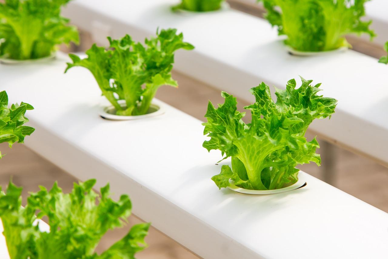 hydroponic gardening methods