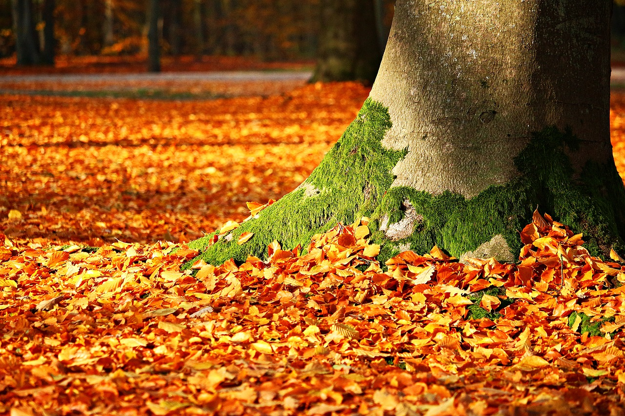 autumn leaves for leaf mold