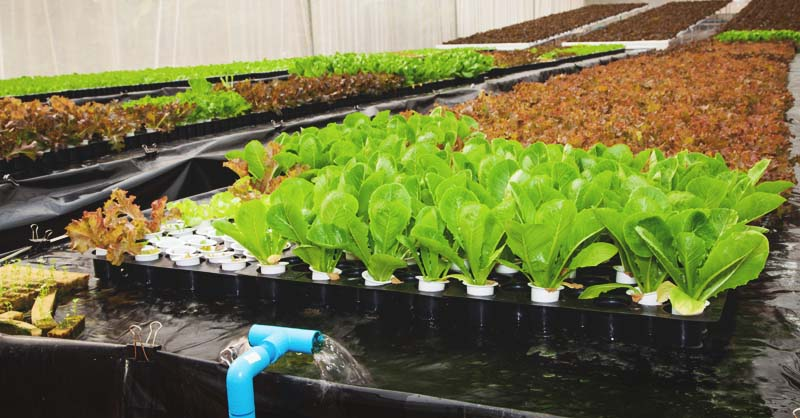 13 Diy Aquaponics Systems To Suit Any