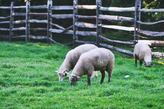 13 Steps for Assessing and Planning Your Homestead Land