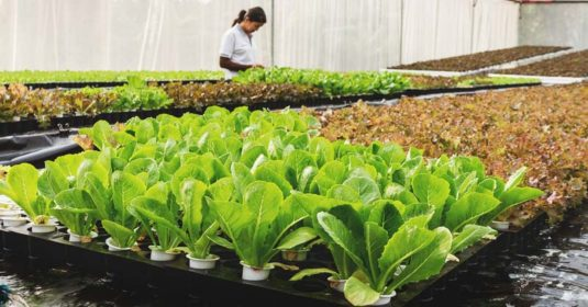 What Is Aquaponics, Why, and How to Start an Aquaponic Garden?