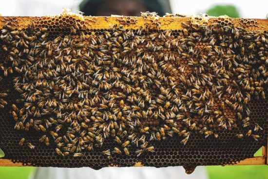 Before You Start Beekeeping: Legal, Cost, Time Commitment, and Bee Anatomy in a Nutshell