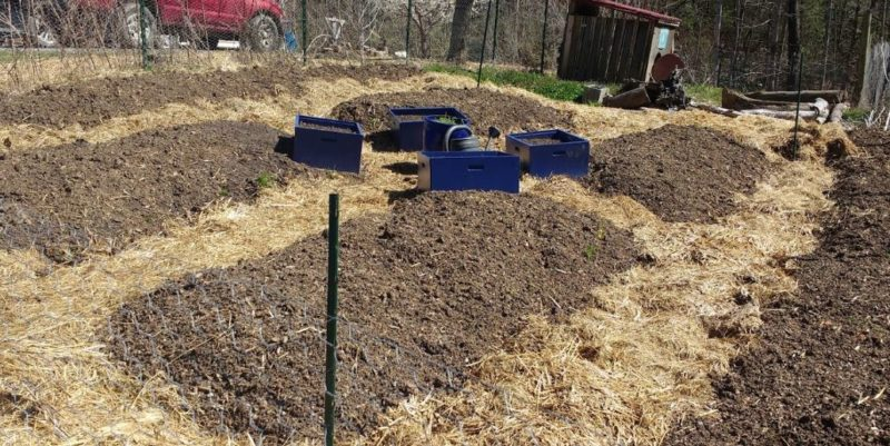 An Organic Vegetable Garden, Weed Control In Vegetable Garden