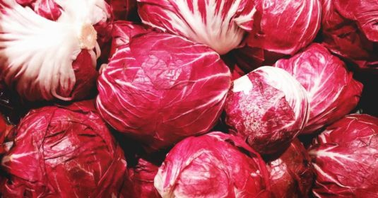 Growing Radicchio: A Complete Guide on How to Plant, Grow, & Harvest Radicchio