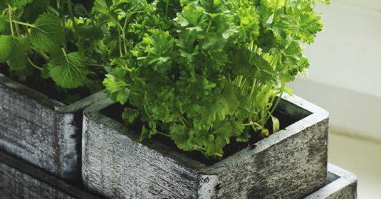 How to Create a Tiny Edible Window Box Garden