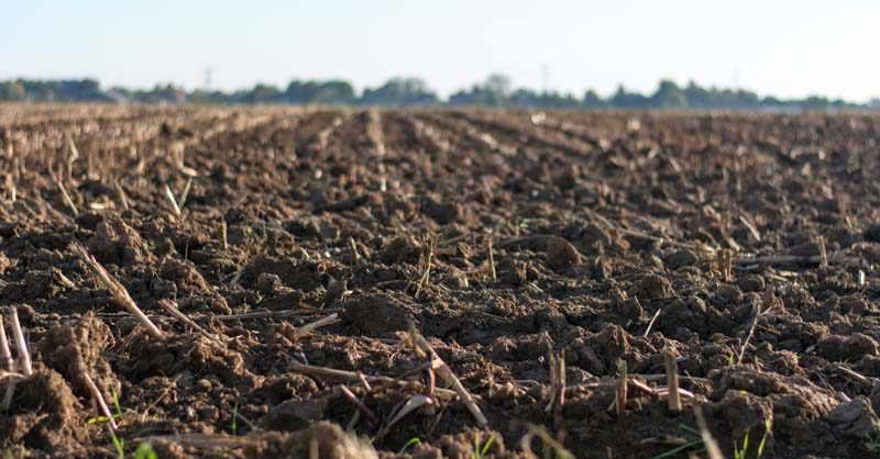 How to Sterilize Soil to Beat Back Bugs and Diseases