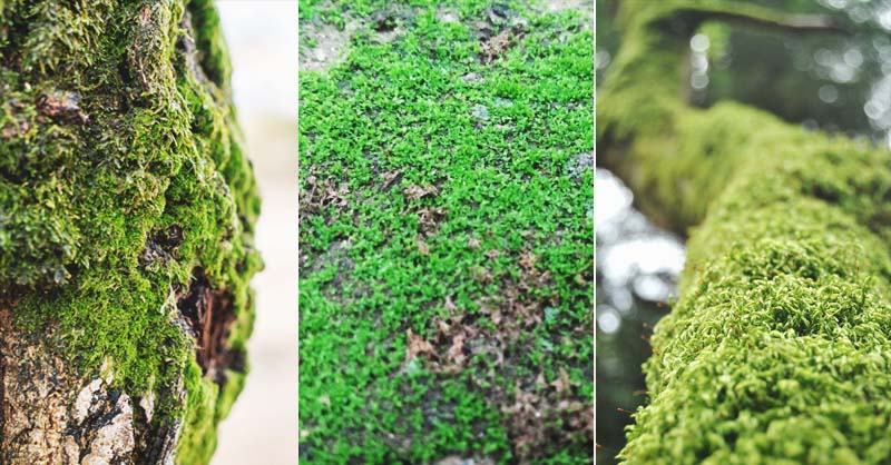 Landscaping With Moss Can Create A Magical Fairy Tale Garden