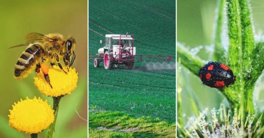 The Dangers of Neonicotinoids Every Gardener Should Know