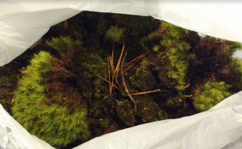 buying moss for landscaping