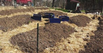 Weed Control Plan for an Organic Vegetable Garden