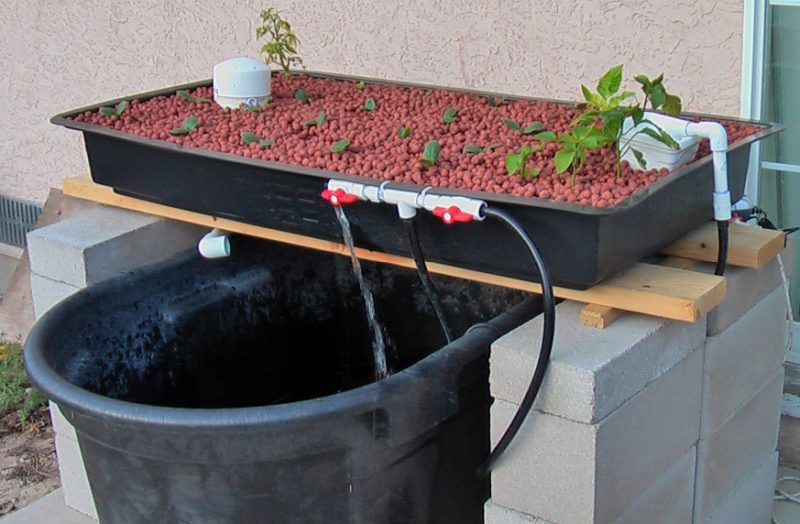 small aquaponics systems