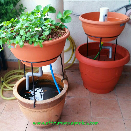 patio aquaponics system