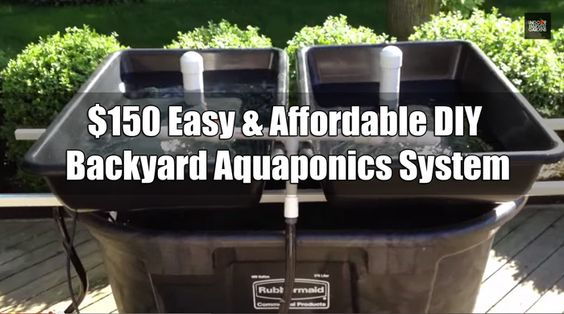 13 Diy Aquaponics Systems To Suit Any Budget