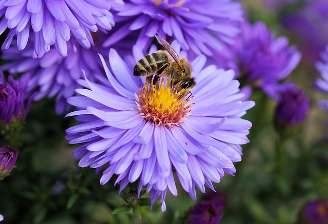 dangers of neonicotinoids - flower and bee