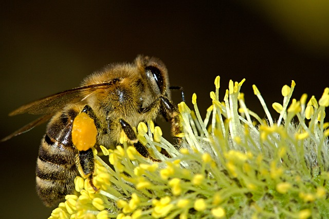 dangers of neonicotinoids to bees