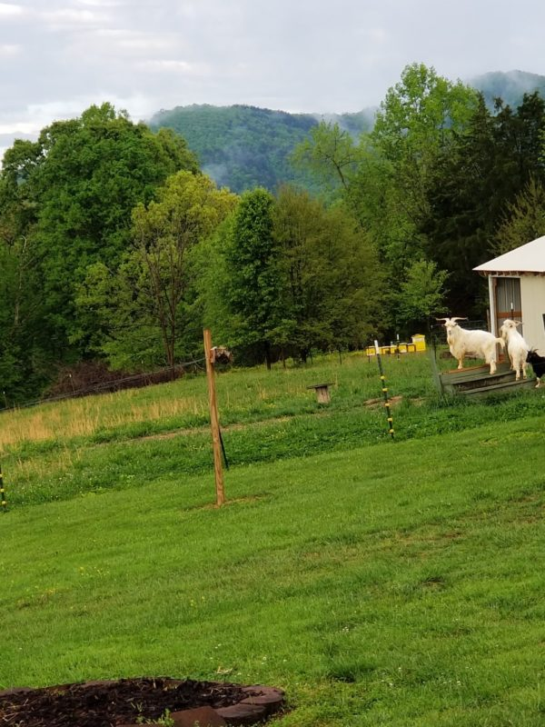 homestead planning - include pasture