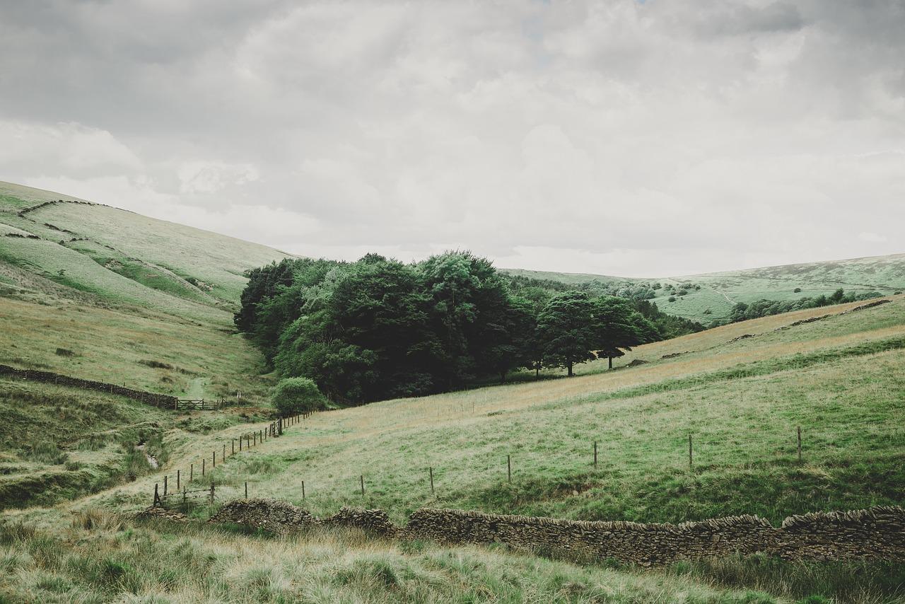 Pasture on which to raise turkeys
