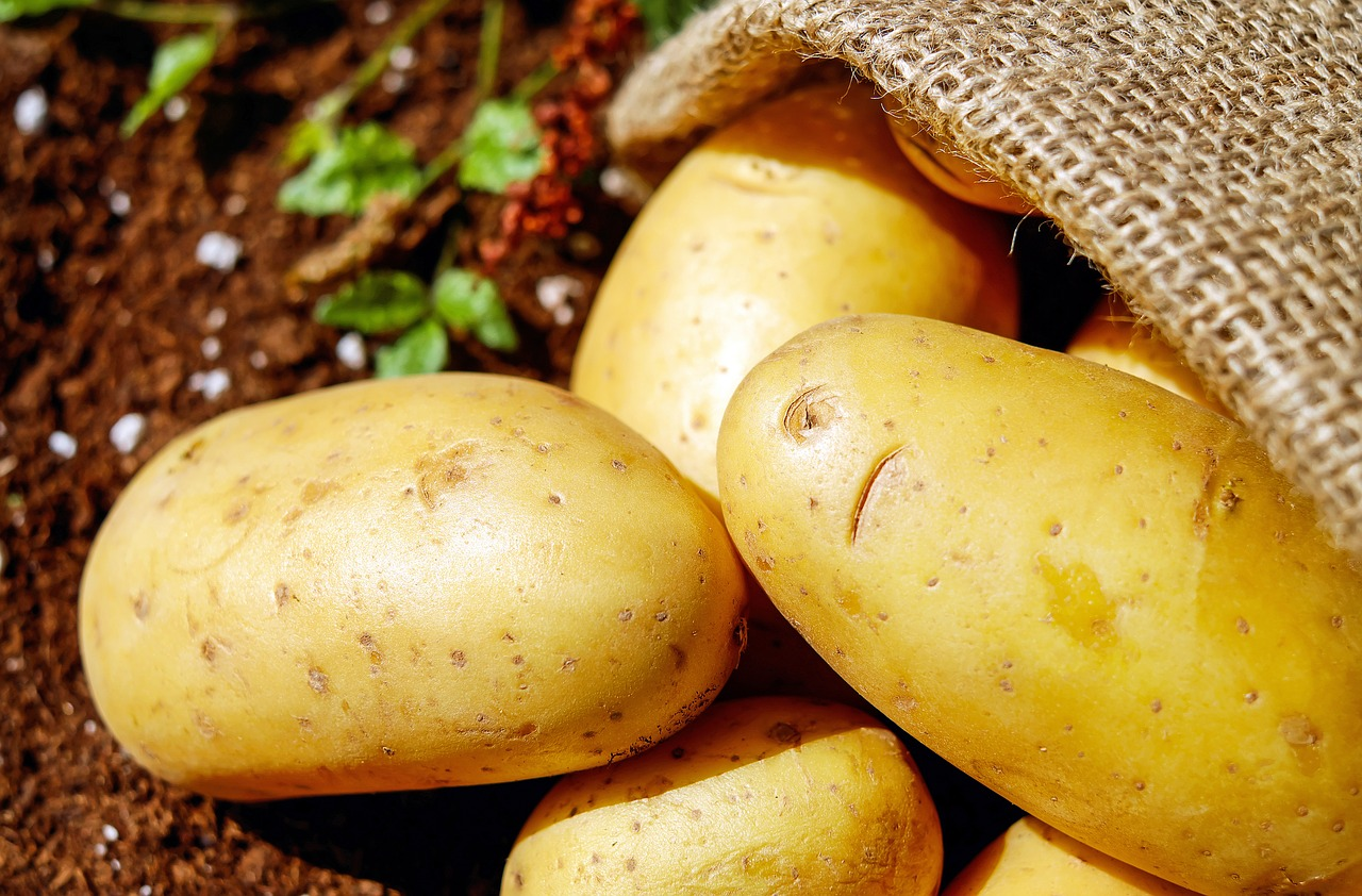 May gardening tips for potatoes