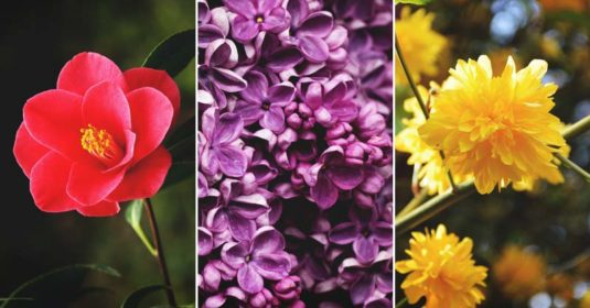 25 Flowering Bushes That Add Beauty to Your Garden