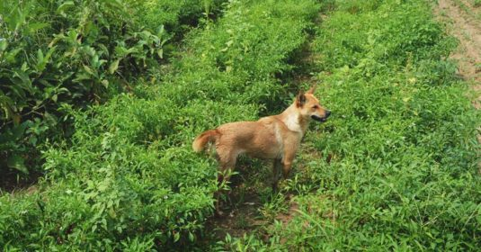 6 Reasons to Get a Farm Dog and 5 Reasons You Might Not